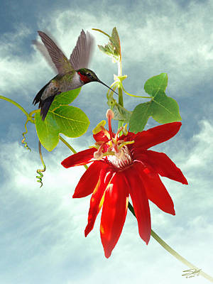 Painting - Hummingbird And Red Passion Flower by IM Spadecaller