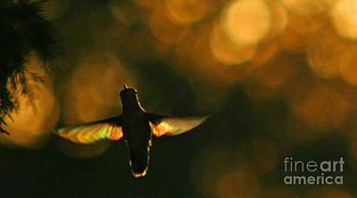 Photograph - Hummingbird Angel Wings Photography by CheyAnne Sexton