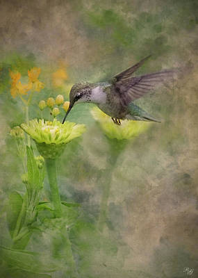 Photograph - Hummingbird Art by Ron Grafe