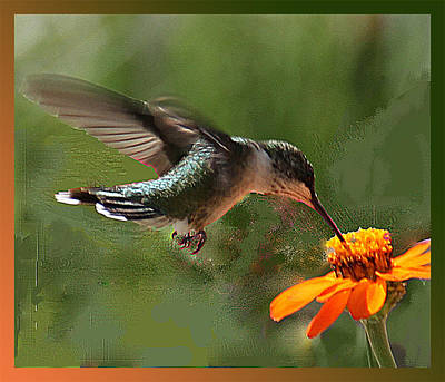 Hummingbird Art Art Print