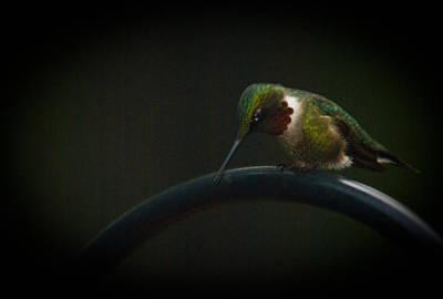 Food And Flowers Still Life - Hummingbird at Dusk 3 by Douglas Barnett