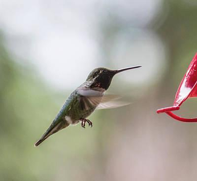 Photograph - Hummingbird Feeding by Marilyn Wilson