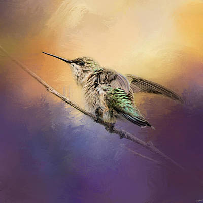 Hummingbird At Sunset Print by Jai Johnson
