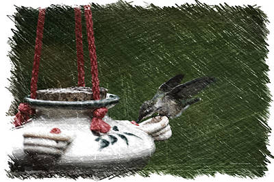 Hummingbird At The Feeder Pa 02 Art Print