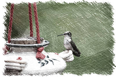 Hummingbird At The Feeder Pa 04 Art Print