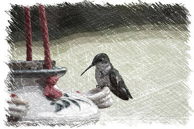Hummingbird At The Feeder Pa 05 Art Print
