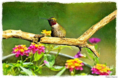 Photograph - Hummingbird Attitude by Debbie Portwood