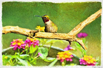 Photograph - Hummingbird Attitude - Digital Paint  by Debbie Portwood