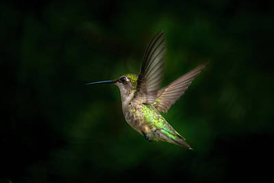 Photograph - Hummingbird B by Kenneth Cole