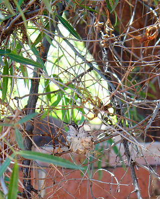 Photograph - Hummingbird Babies by Kume Bryant