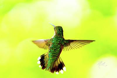 Photograph - Hummingbird by Meta Gatschenberger