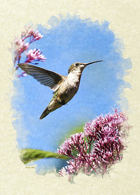Hummingbird Beauty Blank Note Card Art Print