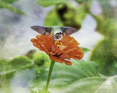 Photograph - Hummingbird Bow by Kerri Farley