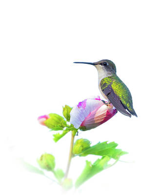 Photograph - Hummingbird by Brian Caldwell