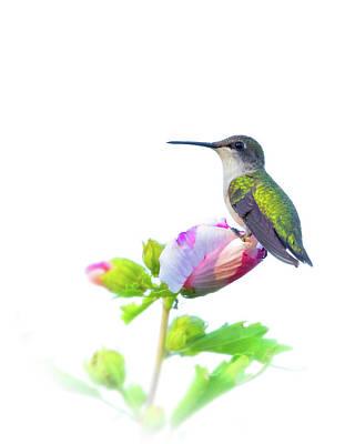 Photograph - Hummingbird by Brian Caldwell
