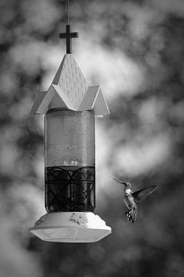 Photograph - Hummingbird - Bw by Beth Vincent