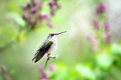 Rollos Photograph - Hummingbird Charm by Christina Rollo