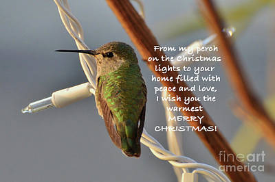 Photograph - Hummingbird Christmas Card by Debby Pueschel