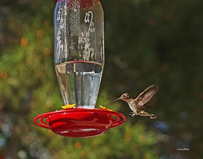 Photograph - Hummingbird Coming For Dinner by Allen Sheffield