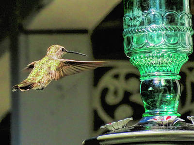 Photograph - Hummingbird Coming In by Charles Ables