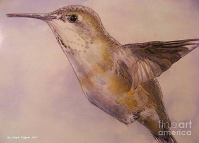 Hummingbird Drawing - Hummingbird by Crispin  Delgado