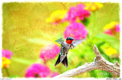 Photograph - Hummingbird Day  -  Wide by Debbie Portwood