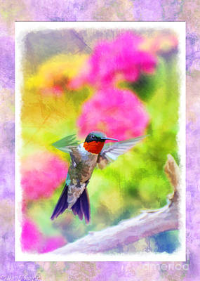 Photograph - Hummingbird Day 2  -  Blank Greeting Card by Debbie Portwood