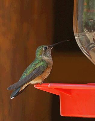 Photograph - Hummingbird De by Ernie Echols