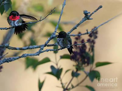Photograph - Hummingbird Delight by Sandra Huston