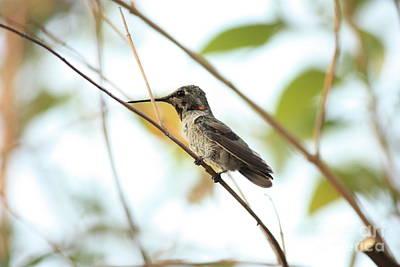 Photograph - Hummingbird Detail by Carol Groenen