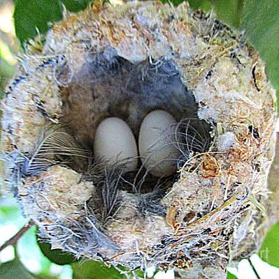 Photograph - Hummingbird Eggs 2 by Randall Weidner