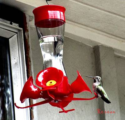Photograph - Hummingbird Feeding by Sadie Reneau