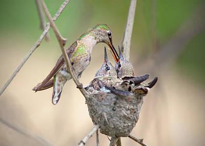 Railroad - Hummingbird Feeding Time by Brian Knott Photography