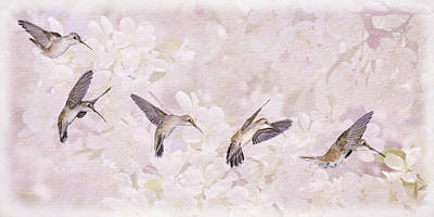 Photograph - Hummingbird Flight Sequence I by Leda Robertson