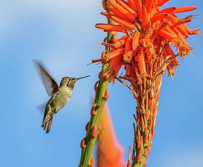 Photograph - Hummingbird Flowers by Jerry Cahill