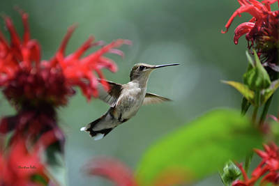 Photograph - Hummingbird Flying by Christina Rollo