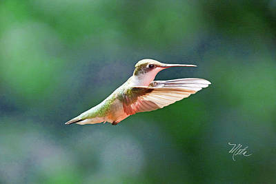 Print featuring the photograph Hummingbird Flying by Meta Gatschenberger
