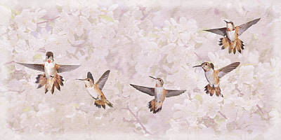 Photograph - Hummingbird Flying Sequence II by Leda Robertson