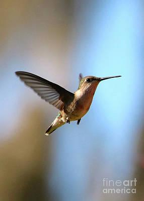 Photograph - Hummingbird Friend by Carol Groenen