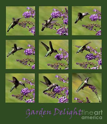 Photograph - Hummingbird Garden Delight Green by Karen Adams