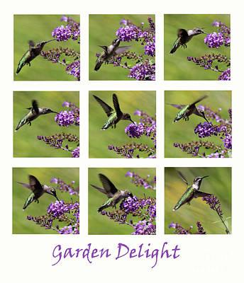 Photograph - Hummingbird Garden Delight by Karen Adams