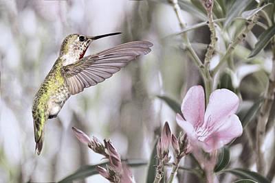 Photograph - Hummingbird Garden I by Leda Robertson