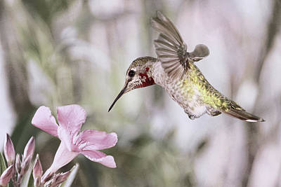 Photograph - Hummingbird Garden II by Leda Robertson