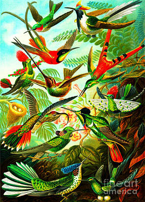 Painting - Hummingbird Gathering by Ernst Haeckel