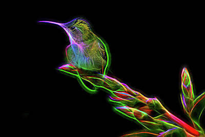 Mixed Media - Hummingbird Glow by Nadia Sanowar