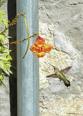 Photograph - Hummingbird - Greeting Card by Allen Sheffield