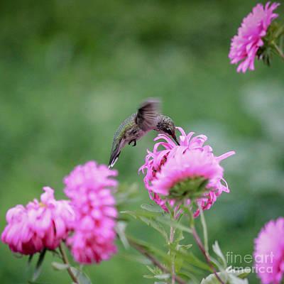 Photograph - Hummingbird Happiness by Viviana  Nadowski