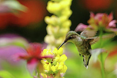 Photograph - Hummingbird Heaven by Debbie Oppermann