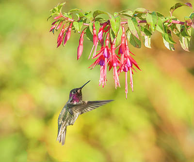 Photograph - Hummingbird Heaven by Loree Johnson