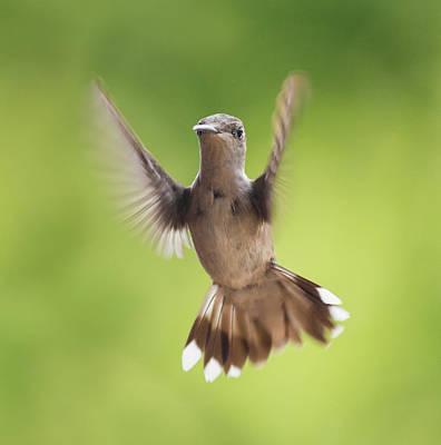 Flying Hummingbird Wall Art - Photograph - Hummingbird Hello There by Betsy Knapp